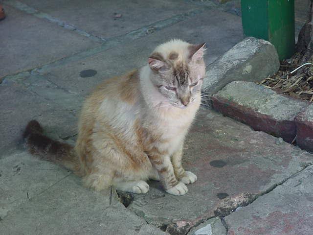 Hemingway six toed Cats