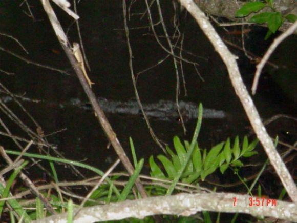 birds on Sanibel Island Florida